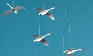 FM004_Scandinavian-Swans-artikel
