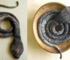 Schlange-selbermachen-stricken