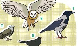Kinderrätsel HIMBEERCHEN im Familienmagazin HIMBEER Zugvögel Herbst ©Silke-Schmidt