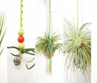 airplants-feeistmeinname-artikel