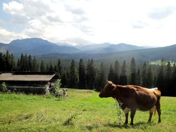 Kuehe-Tatrawandern