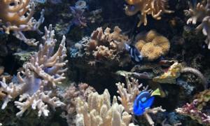 Veranstaltungen für Familien: Das Leben in den Meeren