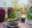 botanischer-salon-artikel