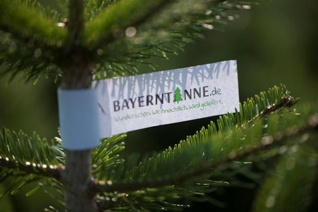 Tannenhof Oberweilbach_Bayerntanne