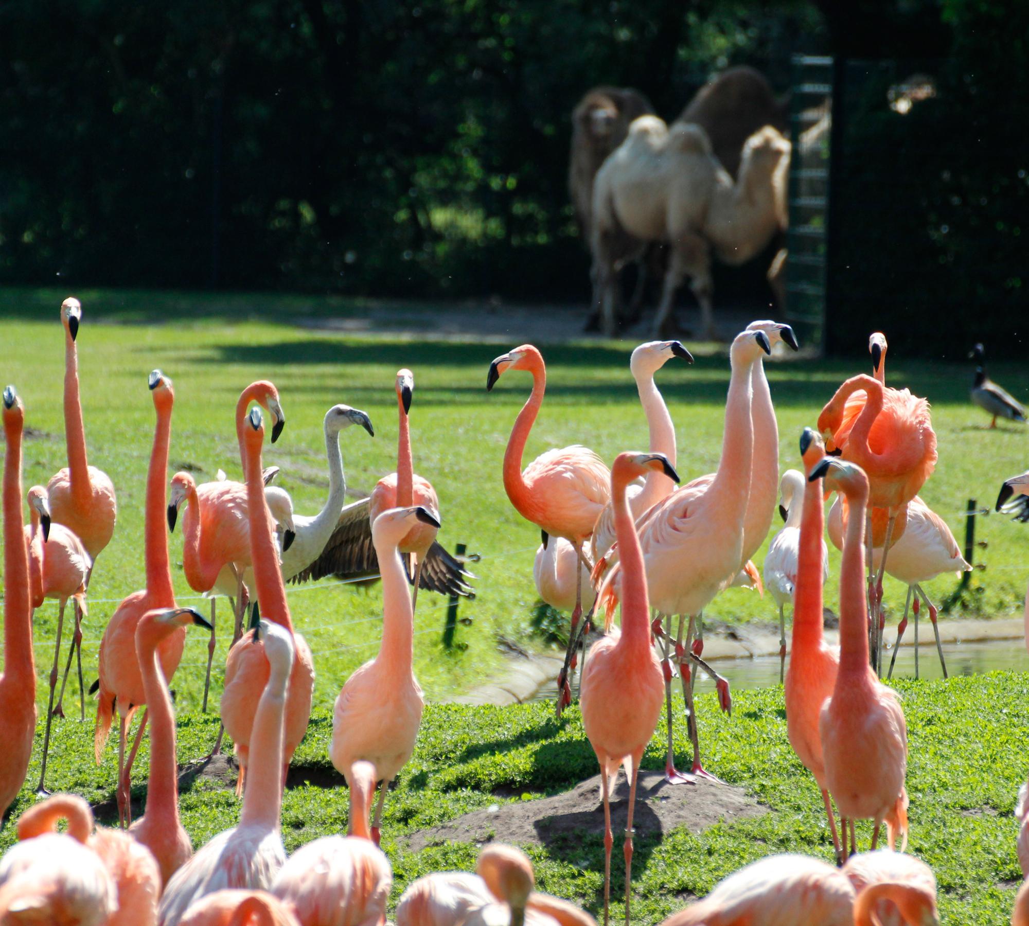 Die Flamingowiese | HIMBEER Magazin