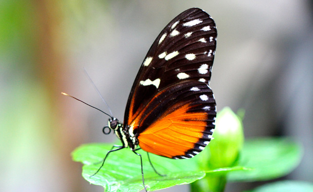 Schmetterlinge-c-Biosphaere-Potsdam