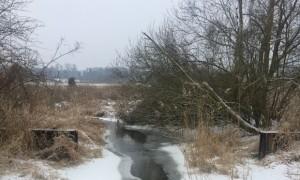 Tegeler-Fließ