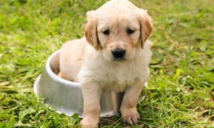 Pixabay I Chiemsee2016_puppy-1207816