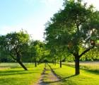 artikelbild-bvp_obstbaumalleen_c-gruen-berlin-gmbh-botanischer-volkspark