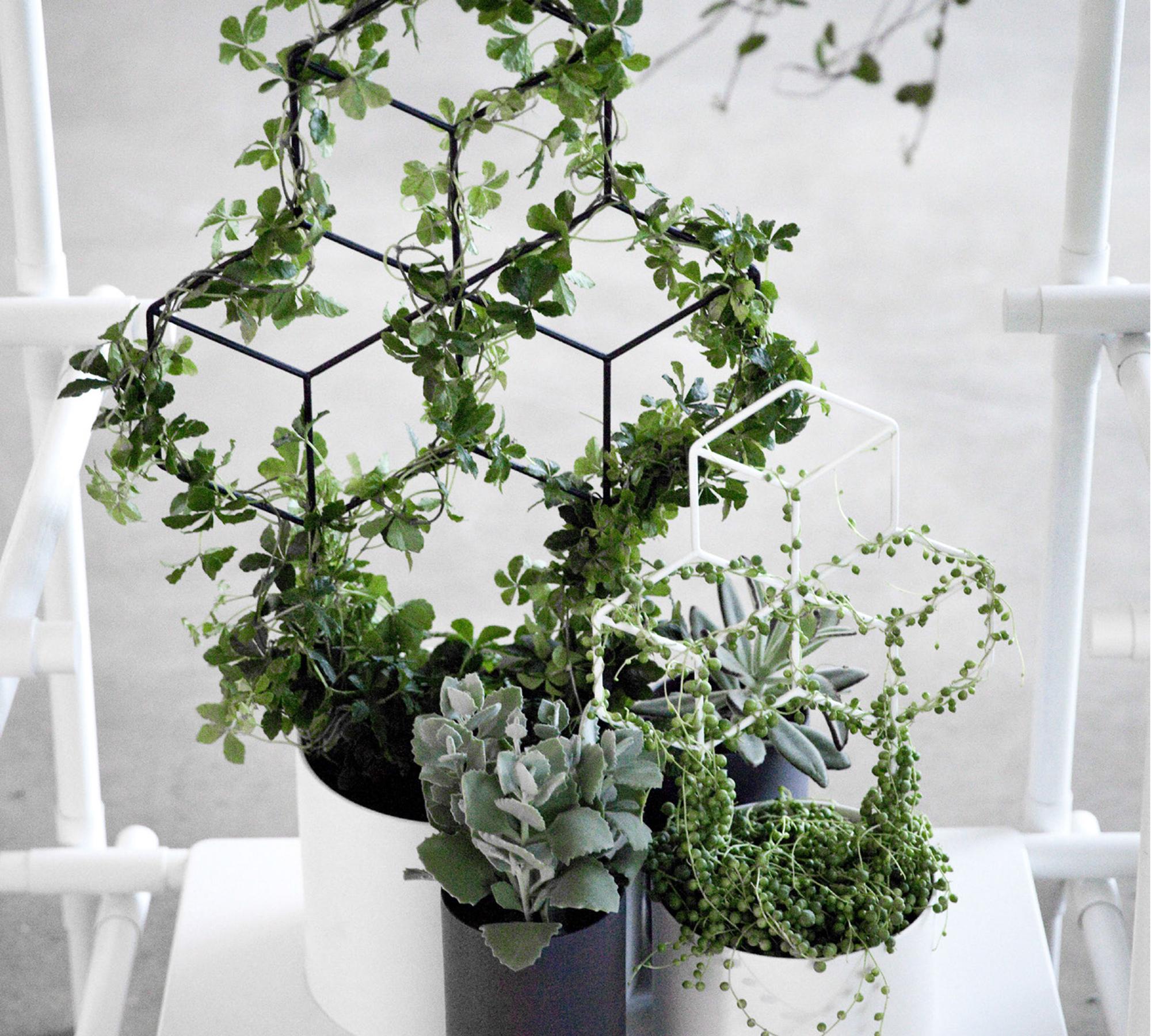 Blumentopf mit Pflanzhilfe | HIMBEER Magazin