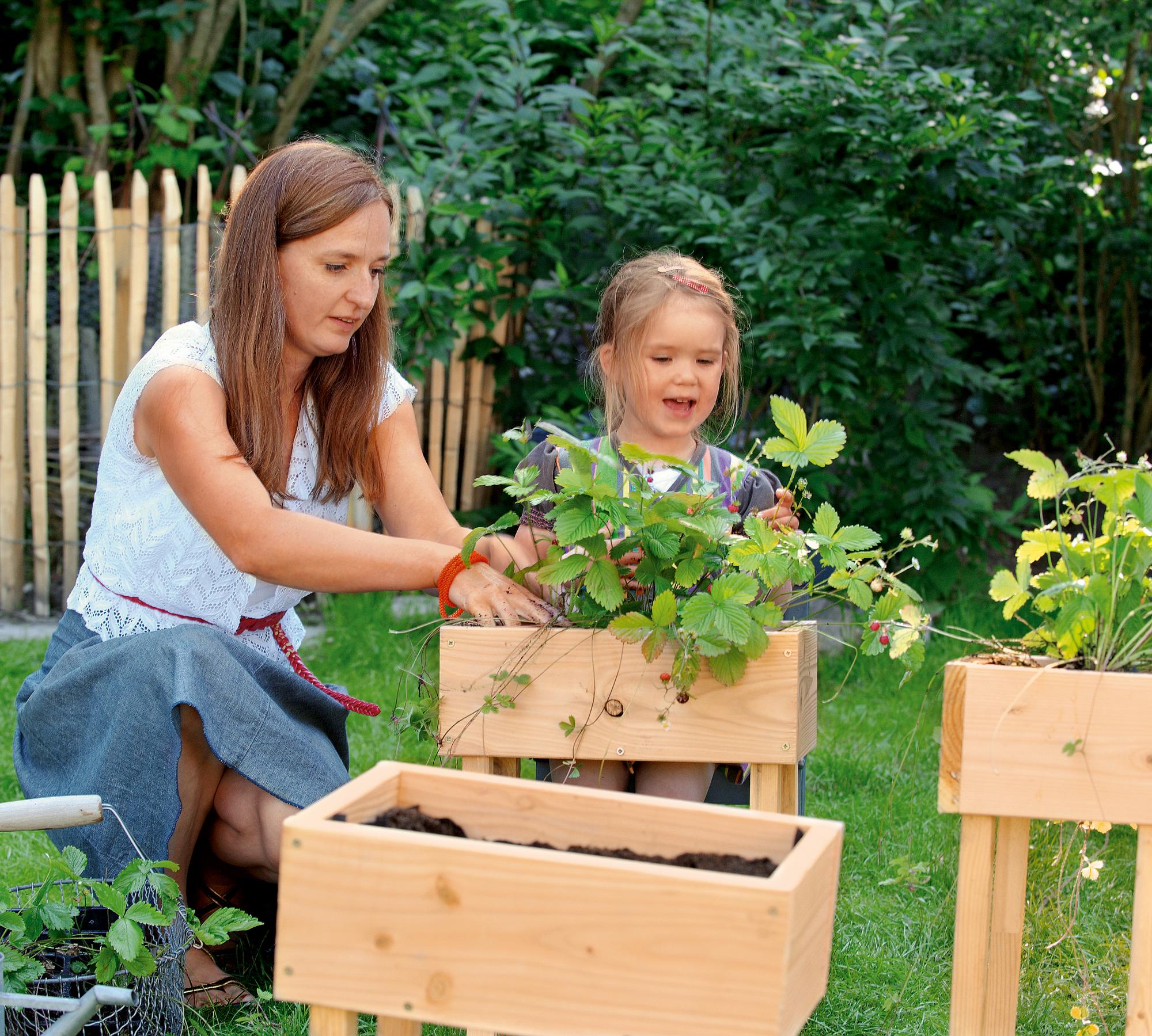 Beflanzen des Hochhausbeets mit Erdbeeren | HIMBEER Magazin