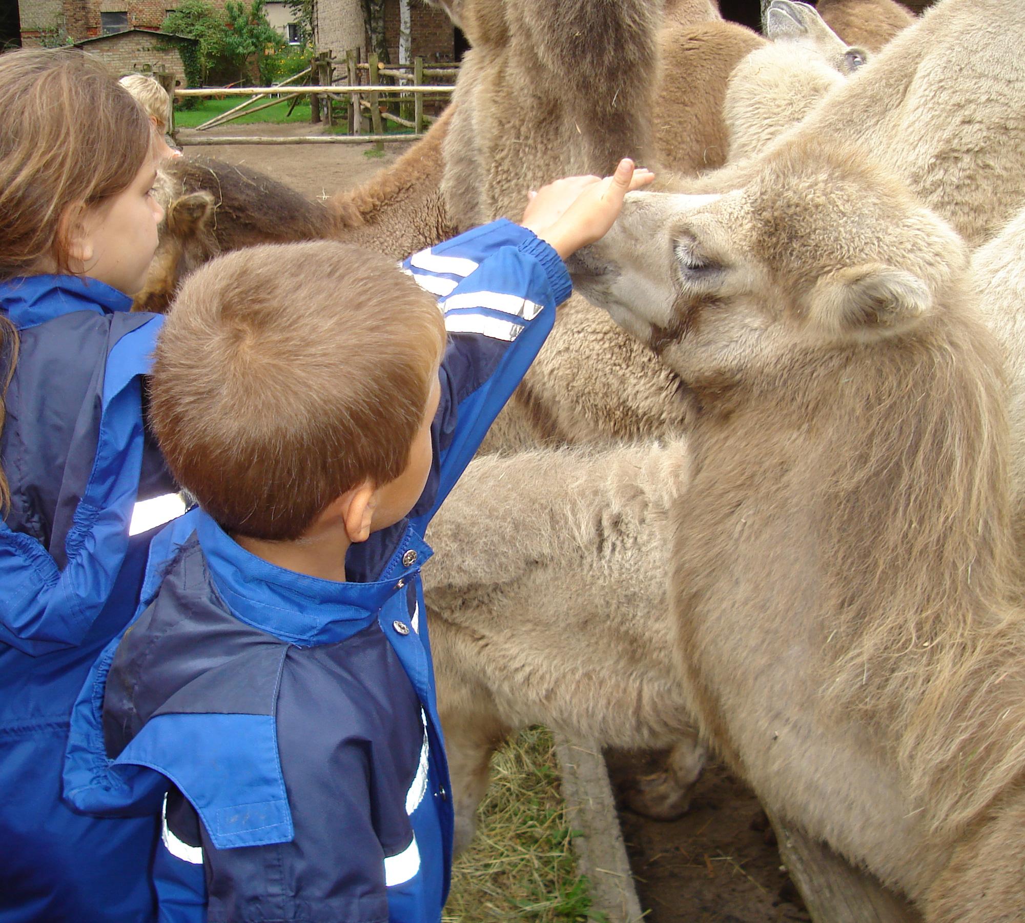 Auf dem Kamel durch Brandenburg | HIMBEER Magazin