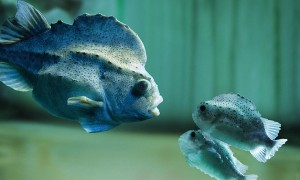 Unter Fischen – das Meeresmuseum Stralsund | BERLIN MIT KIND