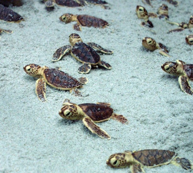 Unter Fischen – das Meeresmuseum Stralsund   BERLIN MIT KIND